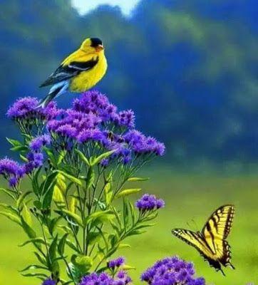 Escenas Musicales Manuel Alejandro Procuro Olvidarte Beautiful Birds Colorful Birds Animals