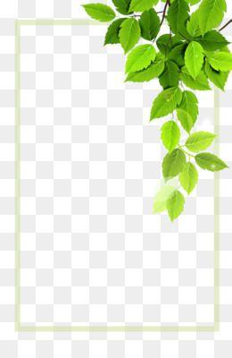 Background Rumput Png : background, rumput, Download, Vector, Green, Plant, Borders, 3307*4961, Latar, Belakang,, Daun,, Rumput