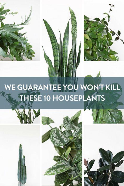 You Won't Kill These Ten Houseplants | Best Low Light Houseplants