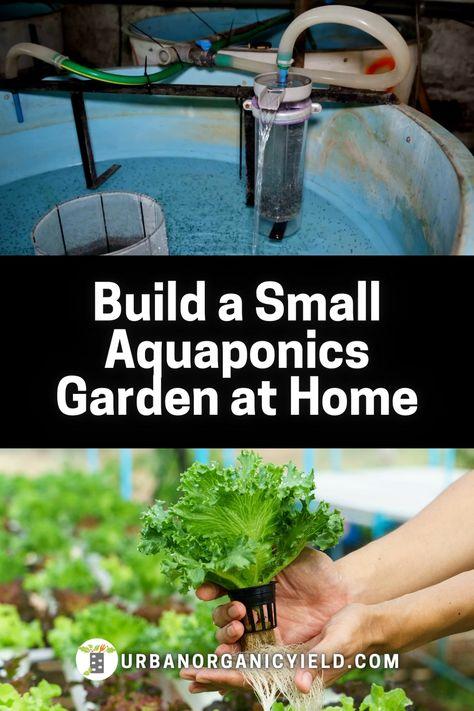 DIY Aquaponics Gardening