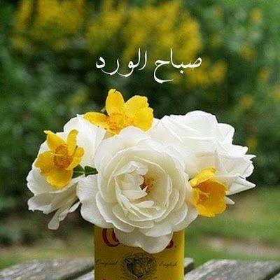 صباحية الورد والفل والياسمين صباحك ورد الورد والياسمين مكتوب عليها صباح الخير صباح الورد In 2021 Good Morning Roses Morning Rose Good Morning Greetings