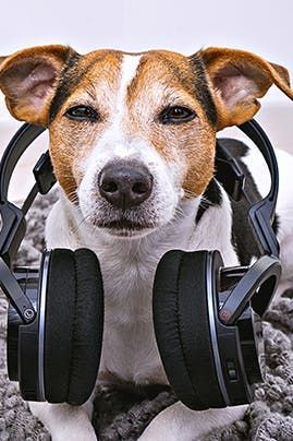 Does My Dog Like It When I Sing Or Am I Just Fulling Myself Dogs Pets Ilovedogs Music In 2020 I Love Dogs Dogs Dog Parents