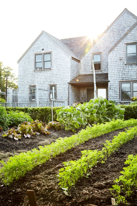 The trick to keeping your backyard veggie plot at maximum productivity throughout the growing season is simple. It's all about timing when you plant so there's always something to harvest. #vegetablegarden #growyourownfood #successionplanting #bhg