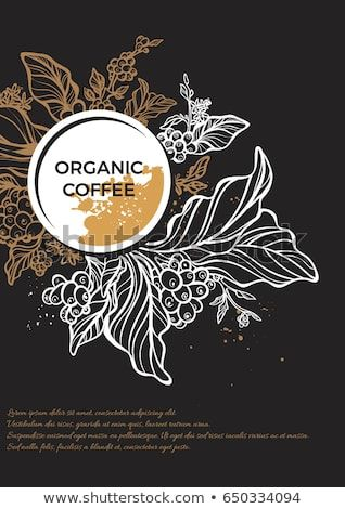 Branch Of Coffee Tree With Leaves Flowers And Coffee Beans Botanical Drawing In Circle Floral Decor For Organic Pro Coffee Artwork Coffee Tree Coffee Flower