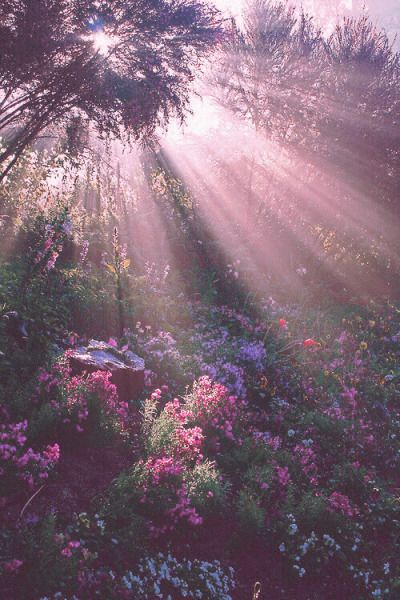 Insert Yourself Into The Imagery Nature Aesthetic Nature Wallpaper Flower Aesthetic