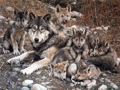 Home Decor Hd Print Animal Art Oil Painting On Canvas (No Stretch) Wolves Hd105