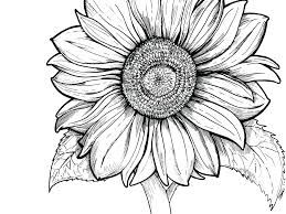 Image Result For Sunflower Coloring Page Sunflower Coloring Pages Coloring Pages For Girls Printable Flower Coloring Pages