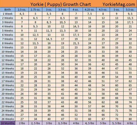 Yorkie Growth Chart How Big Do Yorkies Get Yorkie Puppy Yorkie