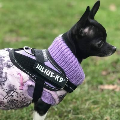 Julius K9 Idc Powerharness For Puppies And Chihuahuas Purple