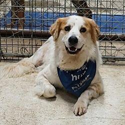 Pet Card Pets Animals Dog Adoption