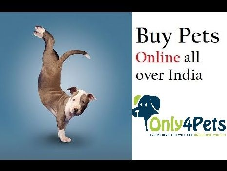 Only4pets Is India S Biggest Online Pet Shop To Buy Dog Cat Fish Flying Creatures Different Pets Only4pets Is A Buy Pets Online In 2020 Pets Online Buy Pets Pets