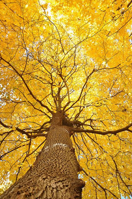 """"""""""" Shades Of Yellow Color Names For Your Inspiration – Going To Tehran """""""" Trucos imprescindibles para evitar mostrar pinceladas al pintar muebles """""""" Beautiful World, Beautiful Places, Trees Beautiful, Simply Beautiful, Beautiful Pictures, Foto Art, Shades Of Yellow, Autumn Trees, Autumn Leaves"""
