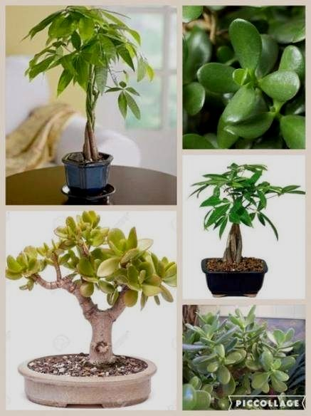 Feng Shui For Wealth And Abundance Feng Shui Bedroom Bathroom Plants Bedroom Plants