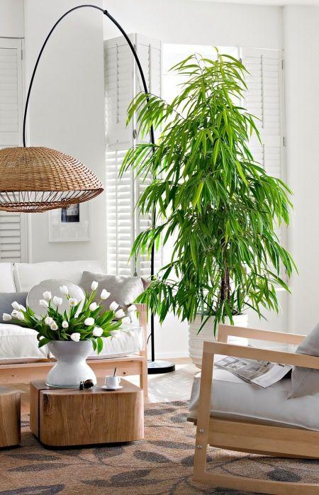 Kwiaty I Rosliny W Salonie Z Drewnianymi Meblami I Wiklinowa Lampa Lovingit Pl White Fabric Sofa How To Feng Shui Your Home Rattan Table