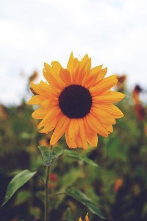 Para quem adora natureza, sol e flores, como o girassol. Citação sobre as mudanças da vida e a liberdade.