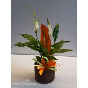 Pin By Barbara Chojna On Kwiat Plants