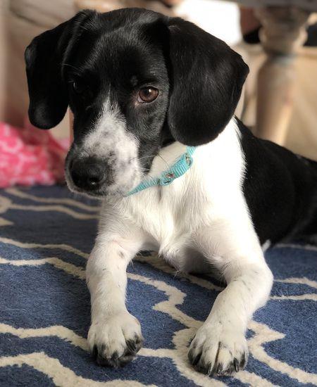 Pin By Karen Spangler On Adoptdontshop Humane Society Animal Stories Pets
