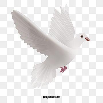 Pomba Branca Pomba Branca Mensageiro Da Paz Um Pombo Correio Imagem Png E Vetor Para Download Gratuito Pigeon Pictures Clipart Images Wedding Logo Design Inspiration