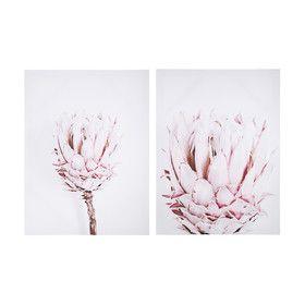 Protea Print 2 Pack Decorating On A Budget Wall Art Decor Protea