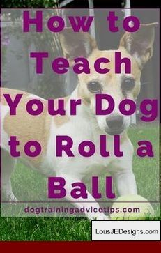 How To Train Your Dog To Stop Barking At The Door And Pics Of