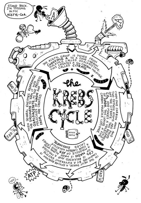 ingenioso - Kreb Cycle on Jay Holser's The Great Respiratory vol. ingenioso - Kreb Cycle on Jay Holser's The Great Respiratory vol. Cell Biology, Ap Biology, Science Biology, Teaching Biology, Science Education, Life Science, Science And Nature, Biology Drawing, Biology Humor