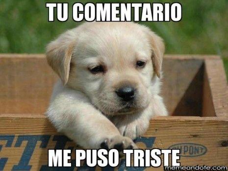 Memes Tristes Memes Llorando Memes Melancolicos Dogs And Kids Baby Animals Funny Dog Memes