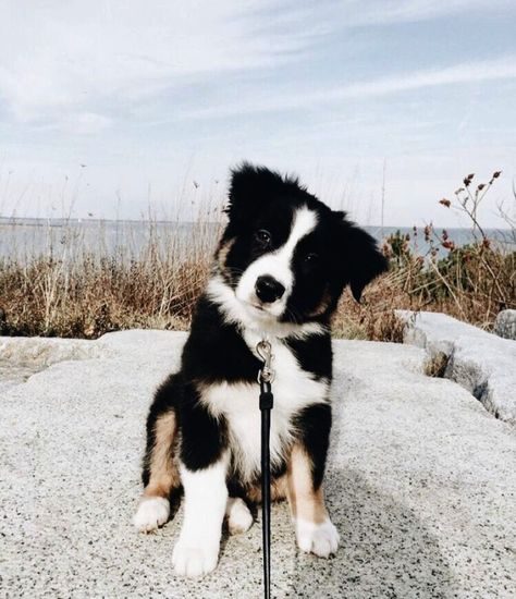 The Little Border Collie Gave This Man A Sense Of Purpose