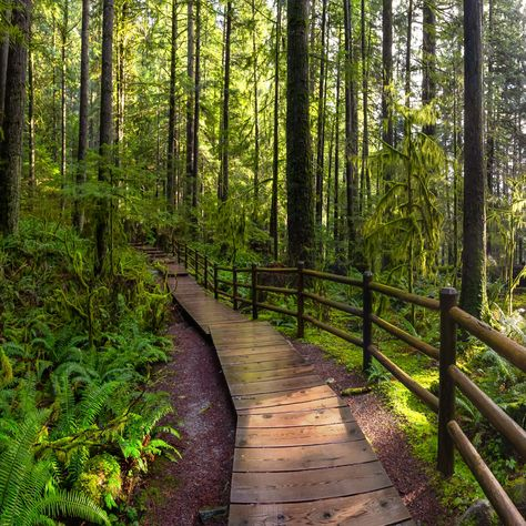 The 5 Best Parks To Experience In Vancouver, BC