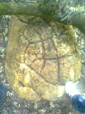 سلحفاة بدون ذيل بدون ارجل بدون رأس Turtle Outdoor Blanket Outdoor
