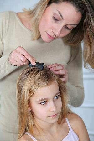 Home remedy for lice