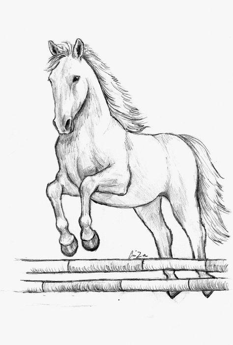 Cavallo Salto Disegni Di Cavalli Disegni E Disegni Da Colorare