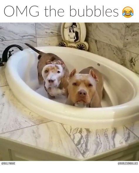 Pitbull Bubble Bath - #Bath #Bubble #forfriends #Pitbull