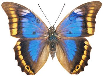 Pin on Butterflies