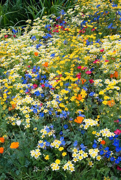 How to Create a Wildflower Garden in the City Schöner wilder Blumengarten Beautiful Flowers Garden, Yellow Flowers, Pretty Flowers, Beautiful Gardens, Wild Flowers, Summer Flowers, Rainbow Flowers, Wild Flower Gardens, Wild Flower Meadow