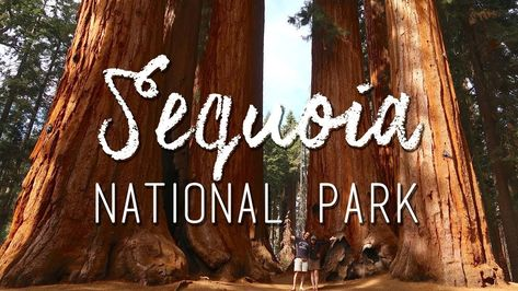 photography Hiking the famous Sequoia...