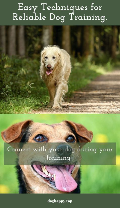 Helpful And Easy Advice For Training Your Dog Training Your Dog