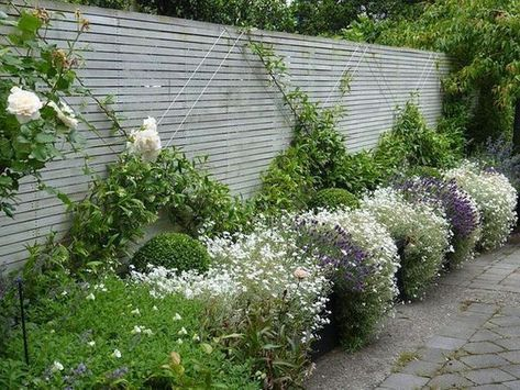 Climbing Plants 12 Ideas For Arranging The Garden With Them