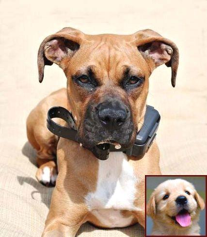 House Training A Puppy Yorkie And Dog Training Courses In Kerala Trainingdogs Dogtraining With Images Dog Training
