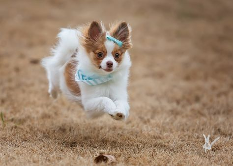 commercialdogphotographer Sweetest little baby just...