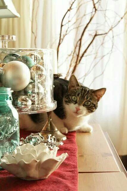 ป กพ นโดย ณ ฐชฎา จ นดาไทย ใน Cat Photos 2