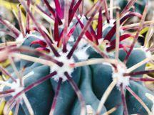 Giromagi Cactus Vendita Piante Grasse Online Piante Grasse