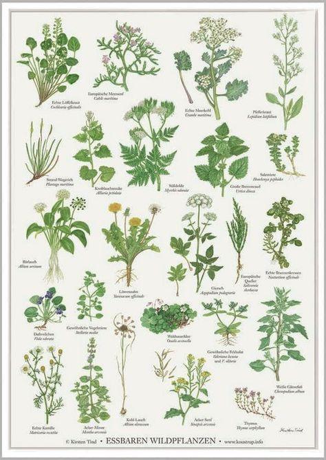 Essbaren Wildplanzen A2 Poster Pflanzen Plakat Essbare Pflanzen
