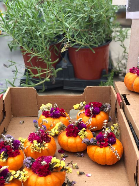 how cute are these mini pumpkin flower arrangements! Perfect for a table setting… Sponsored Sponsored how cute are these mini pumpkin flower arrangements! Perfect for a table setting as placecards. Diy Fall Wreath, Fall Wreaths, Fall Floral Arrangements, Halloween Flower Arrangements, Pumpkin Arrangements, Pumpkin Flower, Pumpkin Bouquet, Mini Pumpkins, Fall Pumpkins