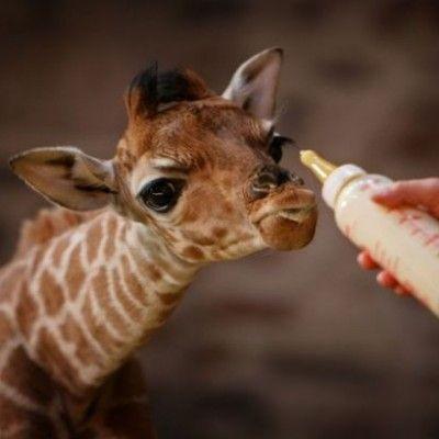 cutest baby animals (23)