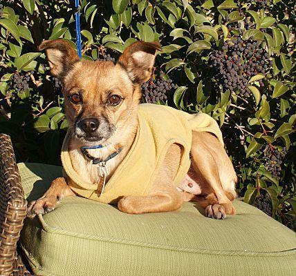 Hurricane Ut Pug Meet Dallas A Pet For Adoption Adopt Me