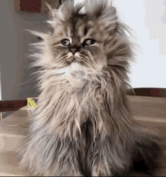Good Morning Funny Animals GIF