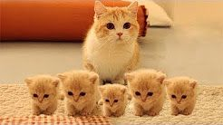 Baby Kittens For Sale Near Me Find The Best Stores Near You 2019 Cute Cat Gif Cute Baby Cats Baby Cats