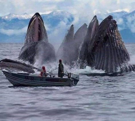 Foto diária do Picdump 36 - Wale und Delphine (Whales and Dolphins) - Animais Wild Life, Beautiful Creatures, Animals Beautiful, Photo Animaliere, Delphine, Ocean Creatures, Humpback Whale, Ocean Life, Marine Life