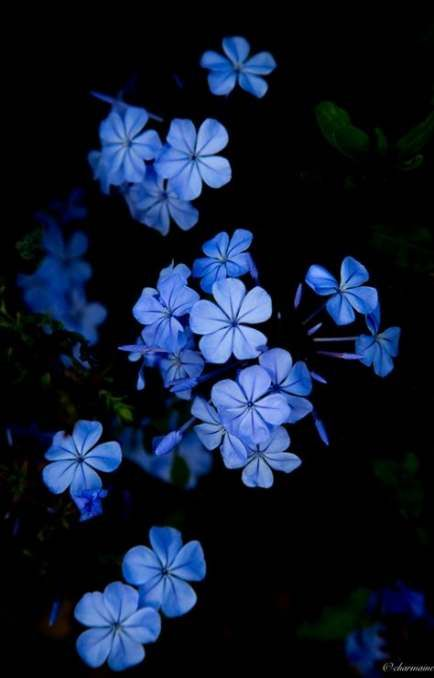 New Wall Paper Tumblr Flores Azuis Ideas Blue Flower Wallpaper Dark Blue Flowers Blue Flower Painting Blue flower wallpaper dark