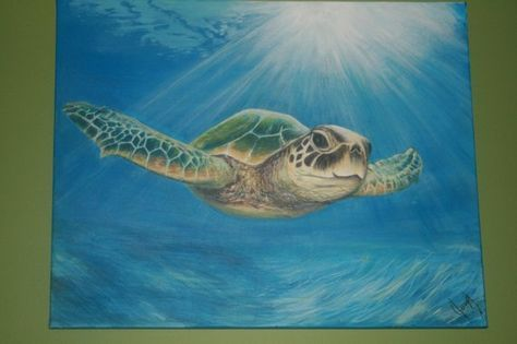 Painting Ideas On Canvas Acrylic Turtle 33 Trendy Ideas Turtle Painting Sea Turtle Painting Turtle Watercolor